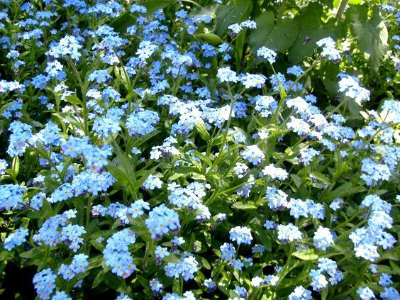 s6309370-albastru