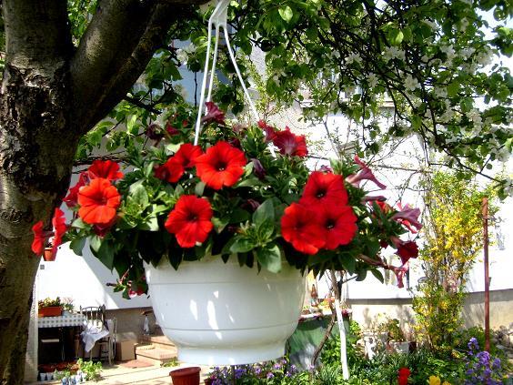 s6309487-flori-rosii