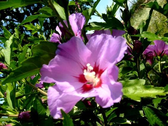 S6302047 primele flori